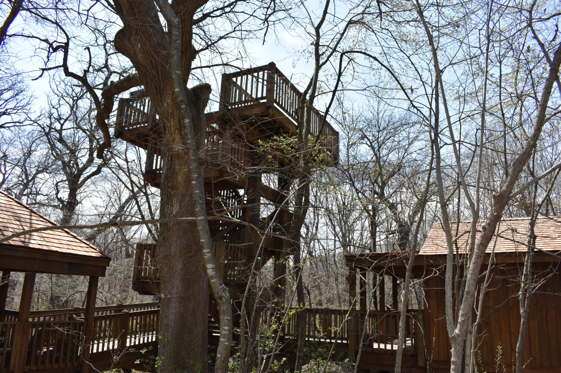 Treehouse q